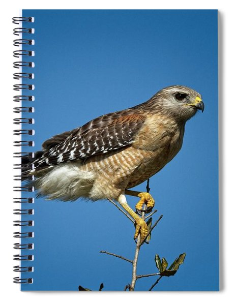 Looking For Prey Spiral Notebook