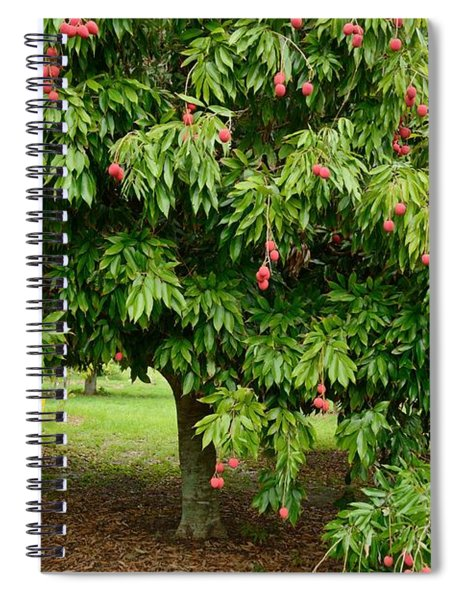 Lychee Ripe For Picking Spiral Notebook