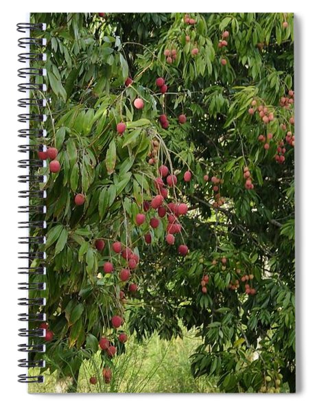 Lychee Tree With Fruit Spiral Notebook
