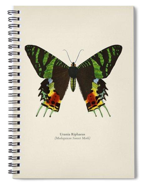 Madagascan Sunset Moth  Urania Riphaeus Illustrated By Charles Dessalines D' Orbigny  1806-1876 3 Spiral Notebook