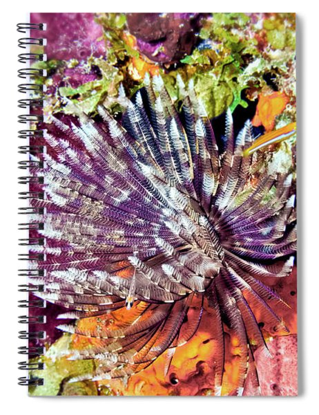 Magnificent Feather Duster Spiral Notebook