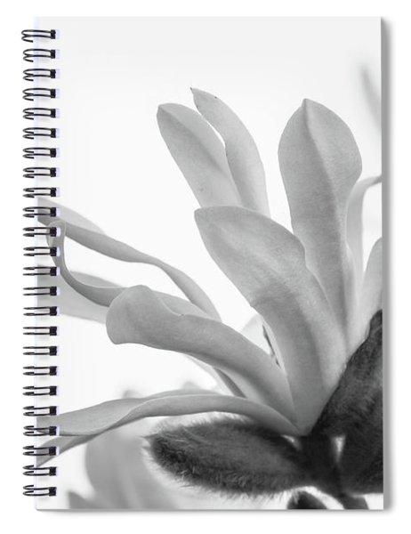 Magnolia Stellata Spiral Notebook