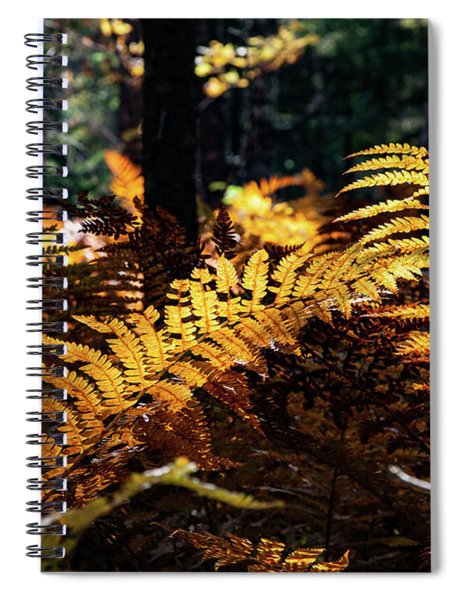 Maine Autumn Ferns Spiral Notebook