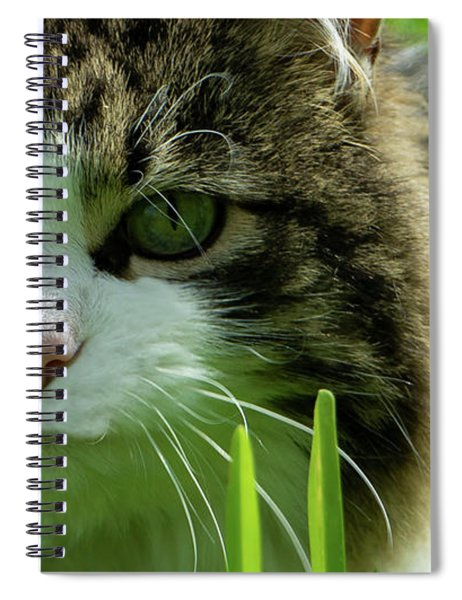 Spiral Notebook featuring the photograph Maine Coon Cat Photo A111018 by Mas Art Studio