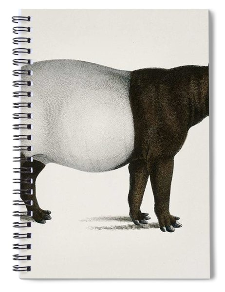 Malayan Tapir  Equus Montanus  Illustrated By Charles Dessalines D' Orbigny  1806-1876  Spiral Notebook