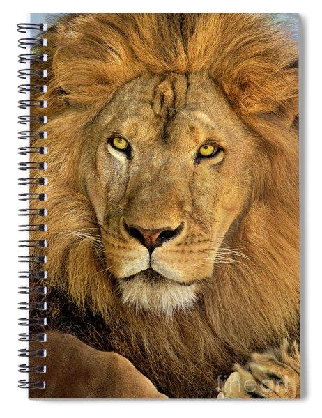 Male African Lion Portrait Wildlife Rescue Spiral Notebook