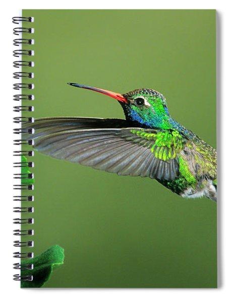 Male Broad-billed Hummingbird At Red Flower Spiral Notebook