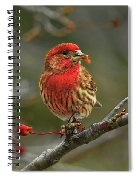 Male House Finch With Crabapple Spiral Notebook