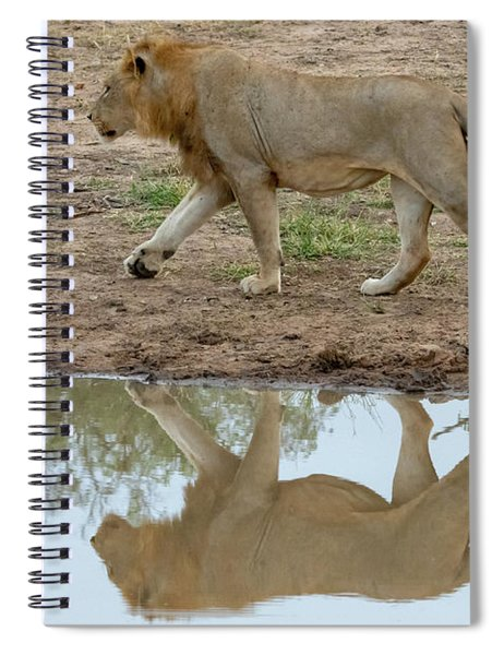 Male Lion And His Reflection Spiral Notebook