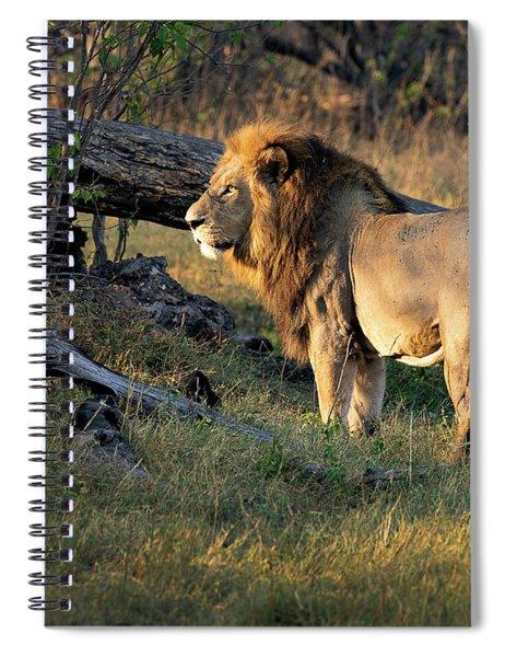 Male Lion In Botswana Spiral Notebook
