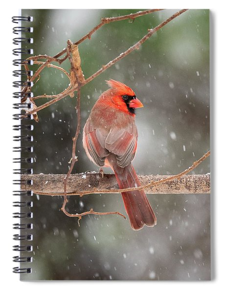 Male Red Cardinal Snowstorm Spiral Notebook