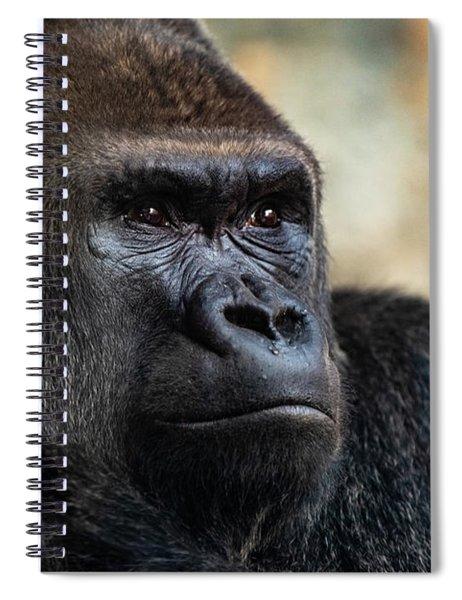 Male Western Gorilla Looking Around, Gorilla Gorilla Gorilla Spiral Notebook