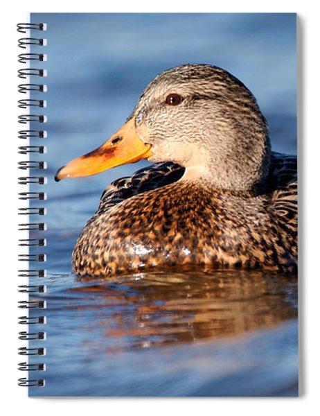 Mallard Duck Relaxing Spiral Notebook