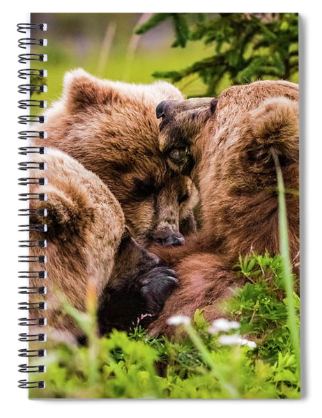 Mama Bear Nursing Her Two Cubs, Lake Clark National Park, Alaska Spiral Notebook