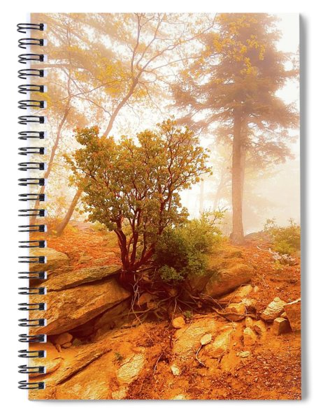 Manzanita In Light Spiral Notebook