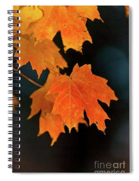 Maple-1 Spiral Notebook