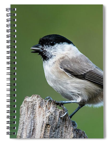Marsh Tit's Profile Spiral Notebook