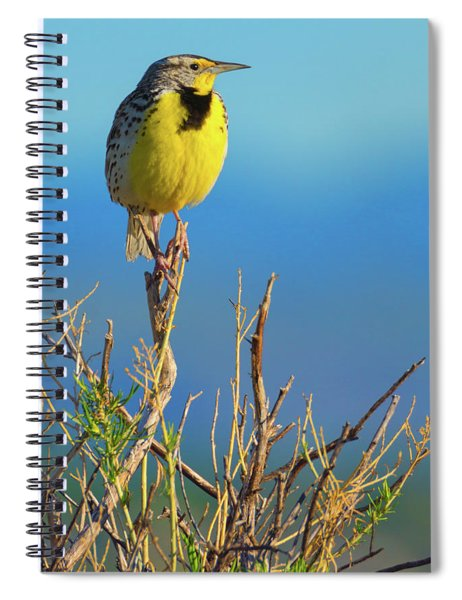 Spiral Notebook featuring the photograph Meadowlark by John De Bord