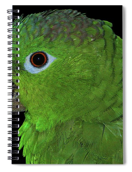 Mealy Amazon Spiral Notebook