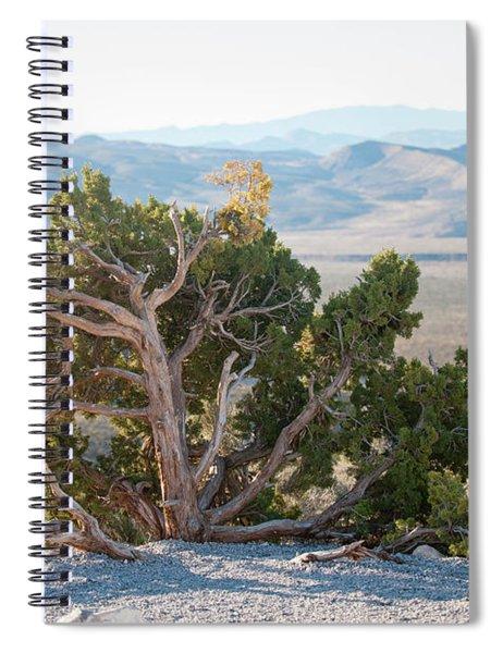 Mesquite In Nevada Desert Spiral Notebook
