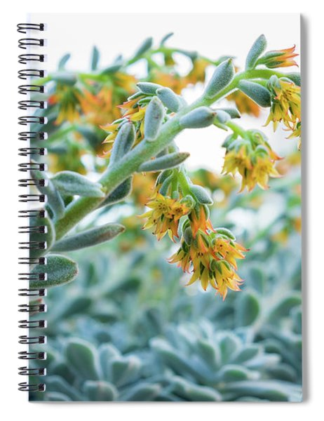 Mexican Echeveria In The  Morning Spiral Notebook