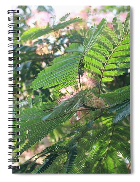 Mimosa Tree Blooms And Fronds Spiral Notebook