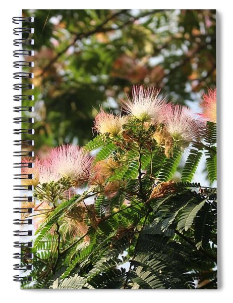 Mimosa Tree Flowers Spiral Notebook