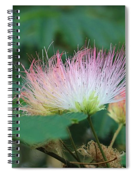 Mimosa Tree In Bloom Spiral Notebook