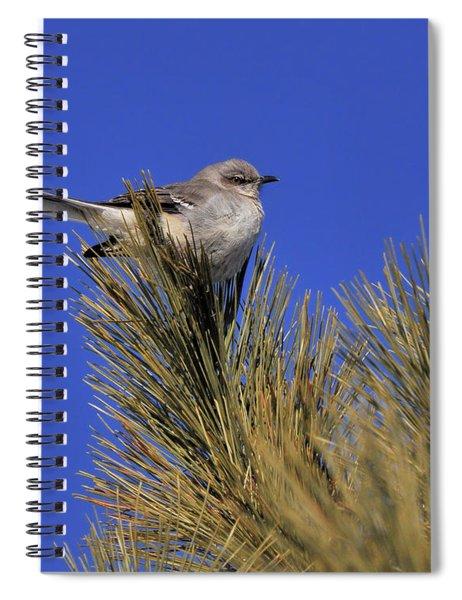Mockingbird In White Pine Spiral Notebook