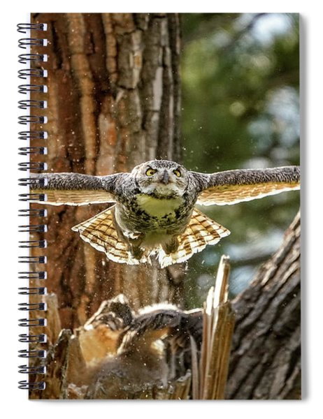 Momma Great Horned Owl Blasting Out Of The Nest Spiral Notebook