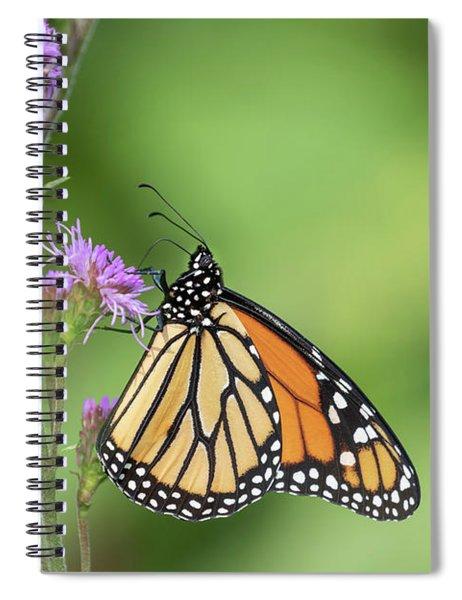 Monarch 2018-21 Spiral Notebook