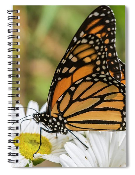 Monarch And Daisies Spiral Notebook
