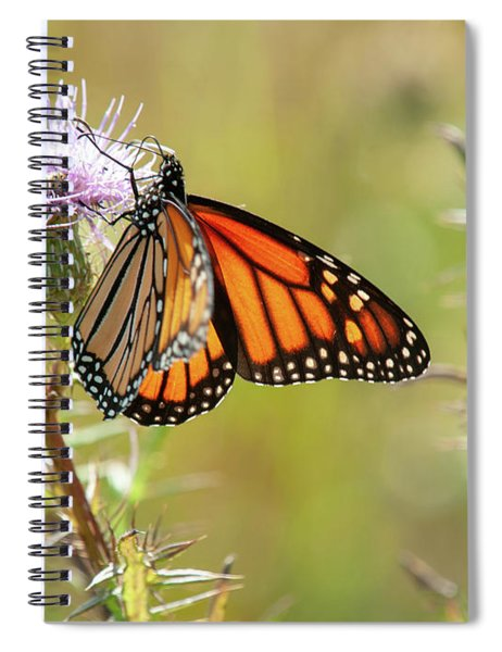 Monarch Butterfly On Thistle 2 Spiral Notebook