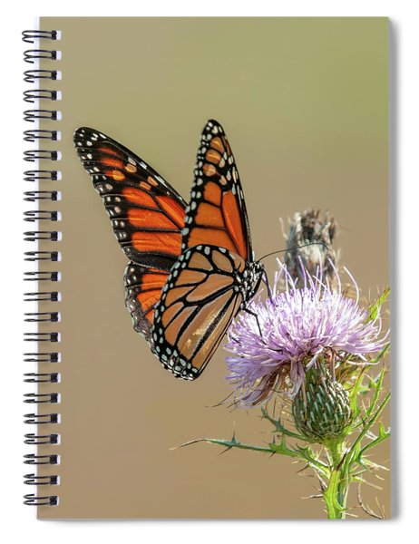 Monarch Butterfly On Thistle 3 Spiral Notebook