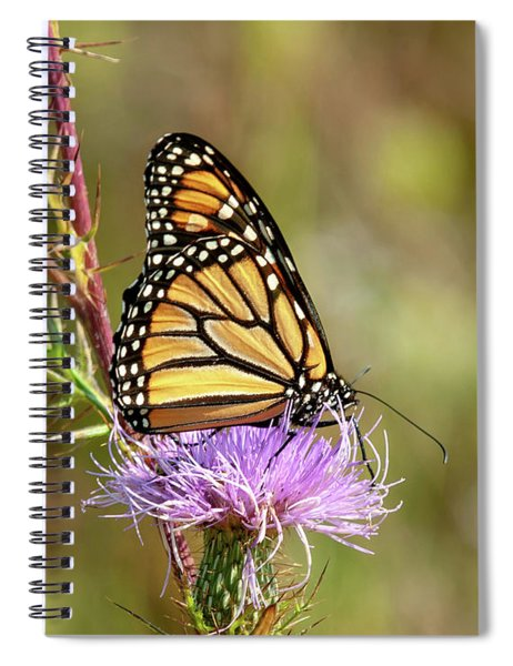 Monarch Butterfly On Thistle 4 Spiral Notebook