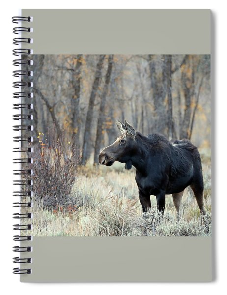 Moose Cow Study Spiral Notebook