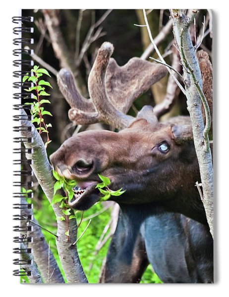 Moose With An Anomalous Eye, At Dinner Time Spiral Notebook