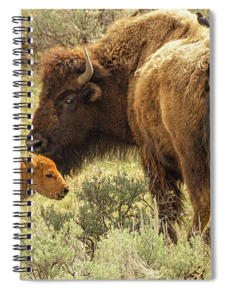 A Bison And Her Calf Spiral Notebook