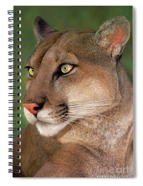 Mountain Lion Portrait Wildlife Rescue Spiral Notebook