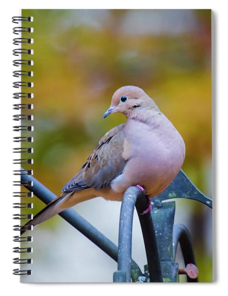 Mourning Dove Spiral Notebook by Robert L Jackson