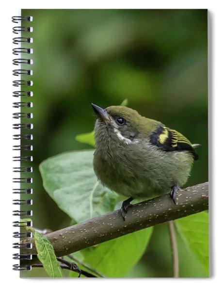 Moustached Tinkerbird Spiral Notebook