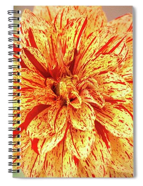 Multi-colored Dahlia Spiral Notebook