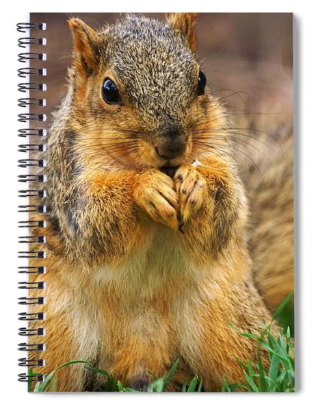 Munching Cute Fox Squirrel Spiral Notebook