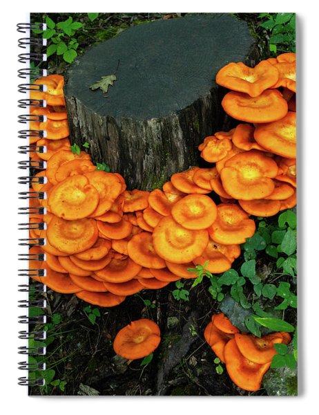 Musrhoom Halo Spiral Notebook
