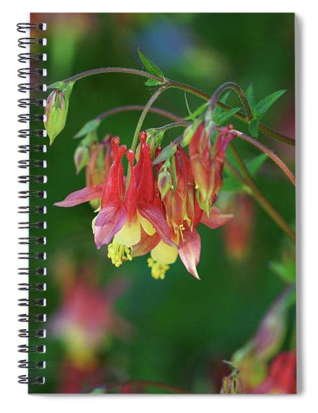 Native Columbine Spiral Notebook