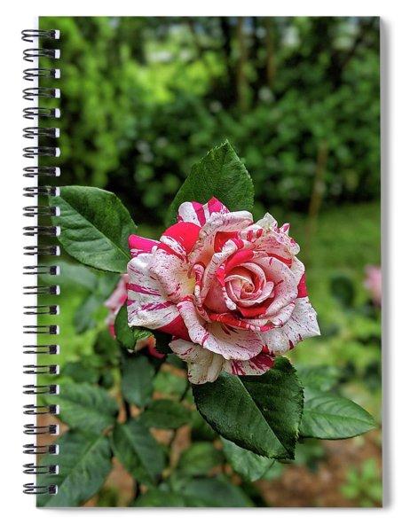Neil Diamond Rose Spiral Notebook