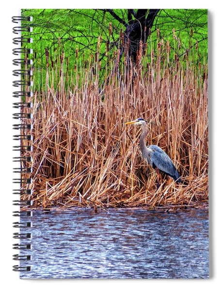 Nesting Great Blue Heron - Paint Spiral Notebook