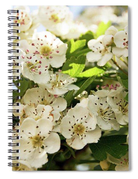 Neston.  Hawthorn Blossom. Spiral Notebook