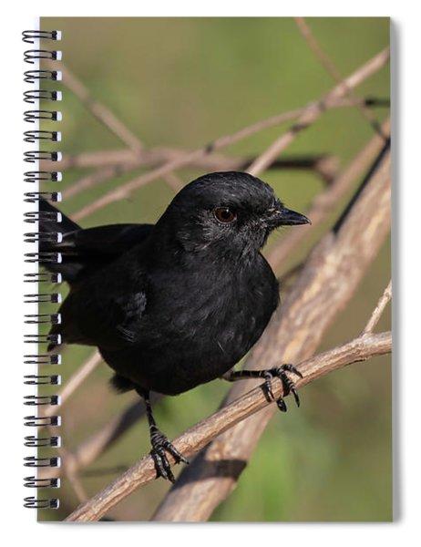 Northern Black Flycatcher Spiral Notebook