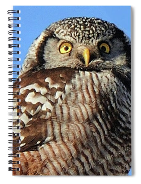 Northern Hawk-owl Spiral Notebook